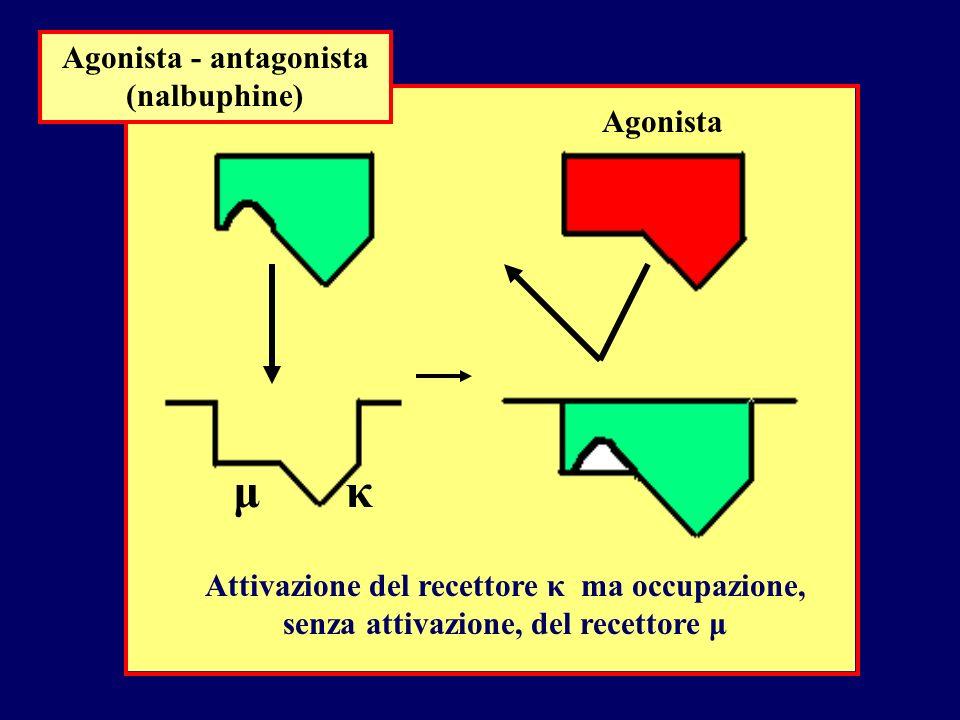 Agonista - antagonista (nalbuphine) Agonista μκ Attivazione del recettore κ ma occupazione, senza attivazione, del recettore μ