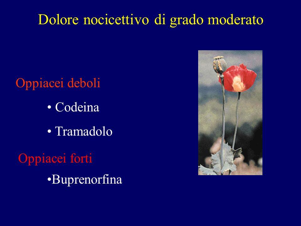 Dolore nocicettivo di grado moderato Oppiacei deboli Codeina Tramadolo Buprenorfina Oppiacei forti