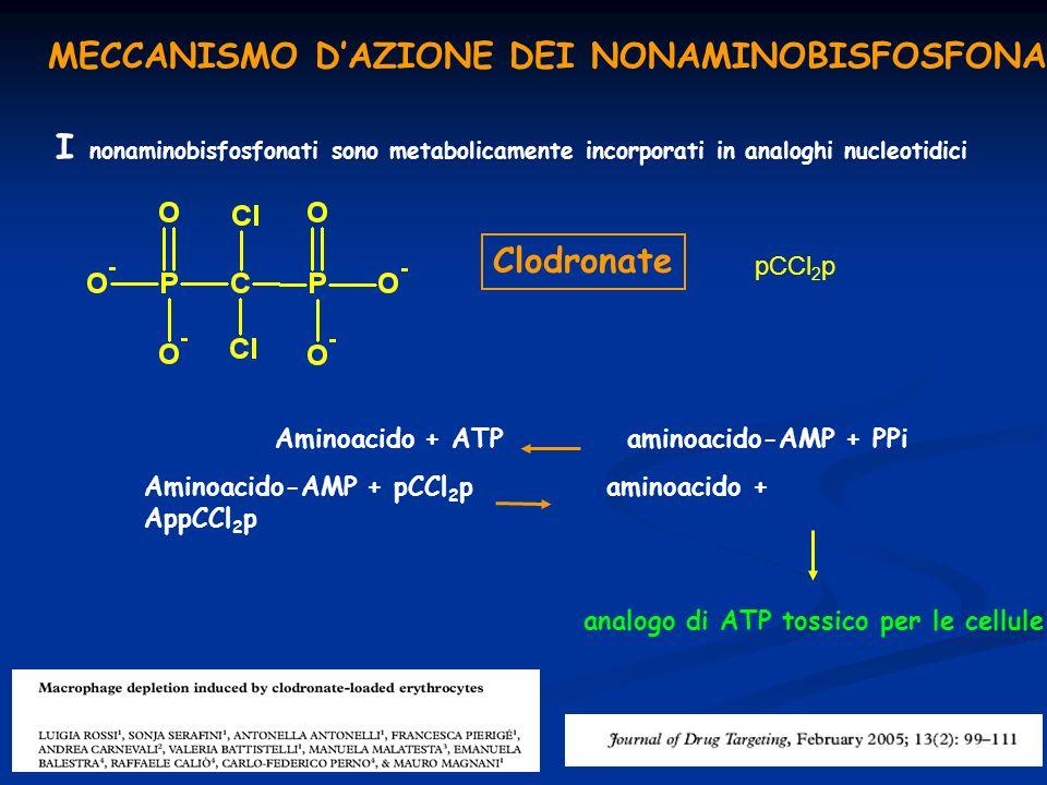 MECCANISMO DAZIONE DEI NONAMINOBISFOSFONATI I nonaminobisfosfonati sono metabolicamente incorporati in analoghi nucleotidici Aminoacido + ATP aminoaci