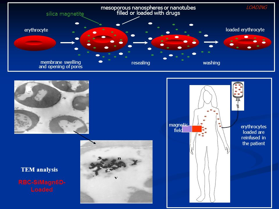 membrane swelling and opening of pores erythrocyte washing loaded erythrocyte resealing mesoporous nanospheres or nanotubes filled or loaded with drug