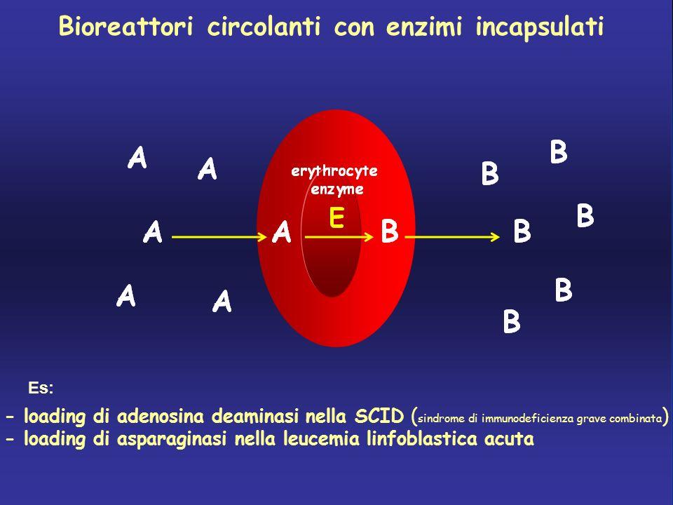 Globuli rossi con desametasone incapsulato in pazienti con m.