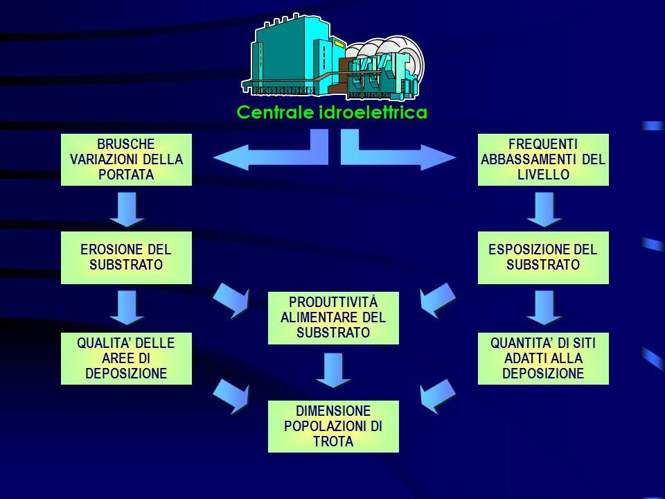 DIMENSIONE POPOLAZIONI DI TROTA BRUSCHE VARIAZIONI DELLA PORTATA FREQUENTI ABBASSAMENTI DEL LIVELLO EROSIONE DEL SUBSTRATO ESPOSIZIONE DEL SUBSTRATO QUANTITA DI SITI ADATTI ALLA DEPOSIZIONE QUALITA DELLE AREE DI DEPOSIZIONE Centrale idroelettrica PRODUTTIVITÀ ALIMENTARE DEL SUBSTRATO