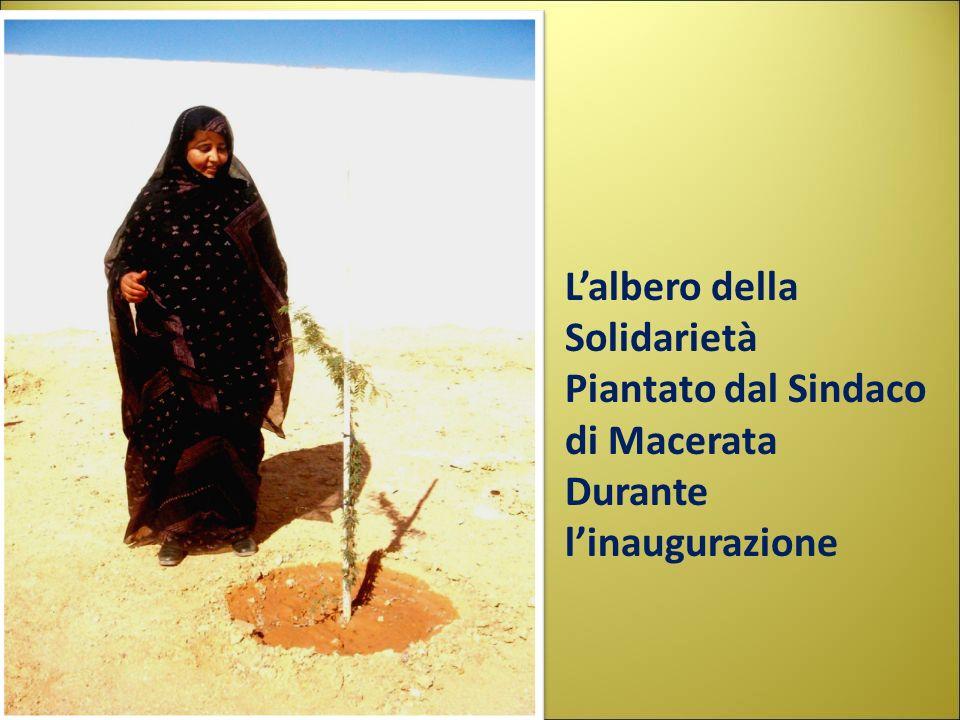 Lalbero della Solidarietà Piantato dal Sindaco di Macerata Durante linaugurazione