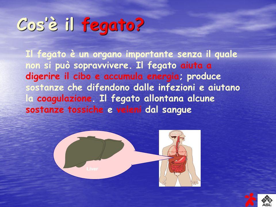 Liver Cosè il fegato? Il fegato è un organo importante senza il quale non si può sopravvivere. Il fegato aiuta a digerire il cibo e accumula energia;
