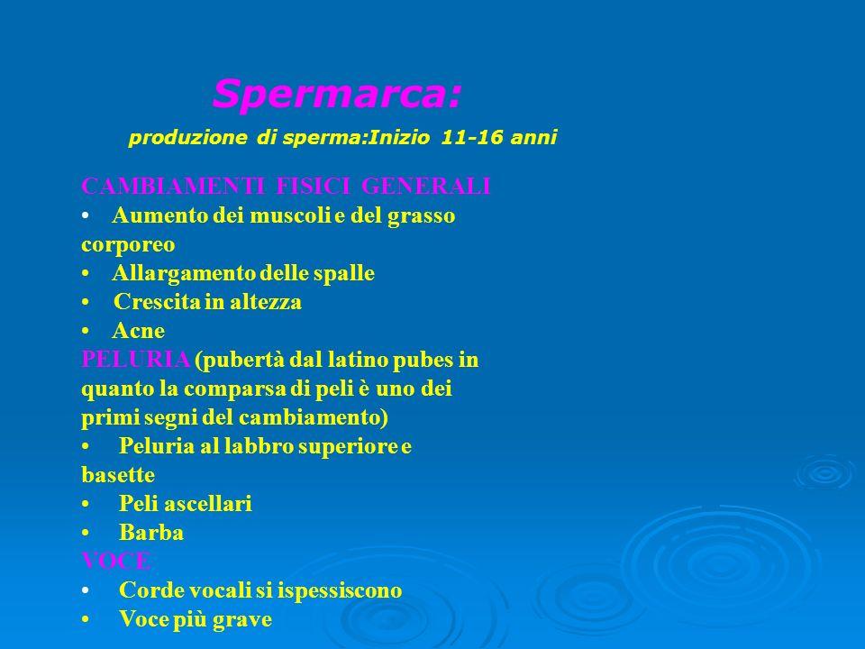 Spermarca: produzione di sperma:Inizio 11-16 anni CAMBIAMENTI FISICI GENERALI Aumento dei muscoli e del grasso corporeo Allargamento delle spalle Cres