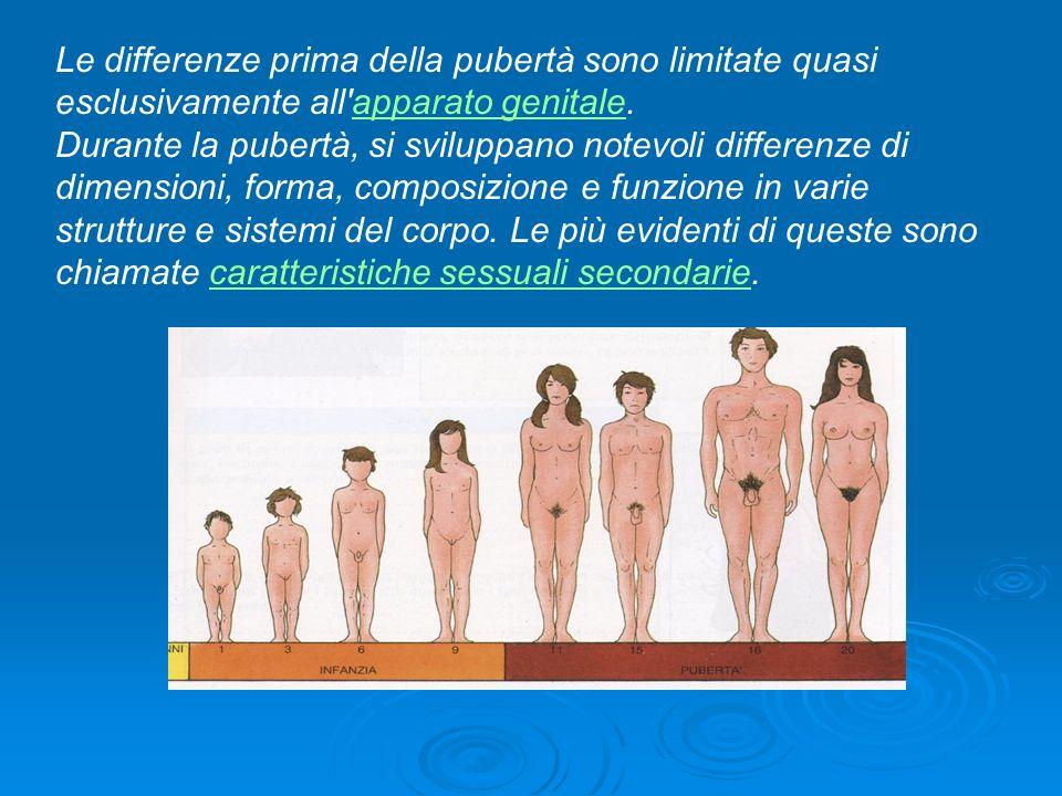 Le differenze prima della pubertà sono limitate quasi esclusivamente all'apparato genitale.apparato genitale Durante la pubertà, si sviluppano notevol