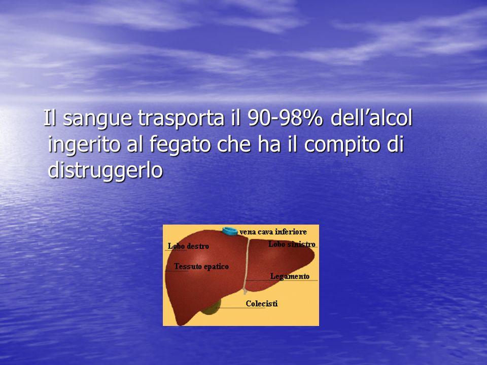 Il sangue trasporta il 90-98% dellalcol ingerito al fegato che ha il compito di distruggerlo Il sangue trasporta il 90-98% dellalcol ingerito al fegat