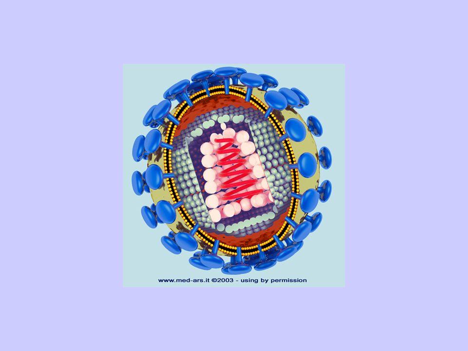 AIDS LAIDS O SINDROME DA IMMUNODEFICIENZA ACQUISITA E UNA MALATTIA INFETTIVA TRASMISSIBILE, CAUSATA DA UN RETROVIRUS DENOMINATO HIV, AD ELEVATA MORTAL