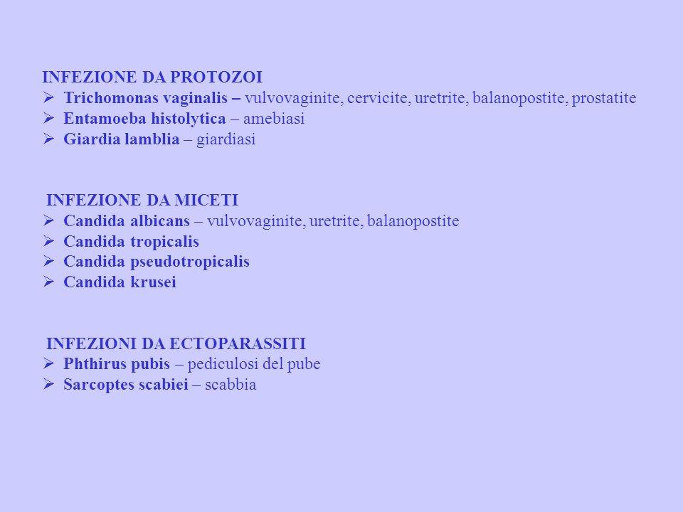 INFEZIONI VIRALI HIV – sindrome da immunodeficienza acquisita HSVI 1-2 – herpes genitale Citomegalovirus (CMV) Papillomavirus umano (HPV) – papillomat