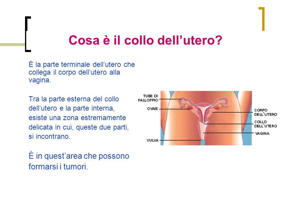 È la parte terminale dellutero che collega il corpo dellutero alla vagina. Tra la parte esterna del collo dellutero e la parte interna, esiste una zon