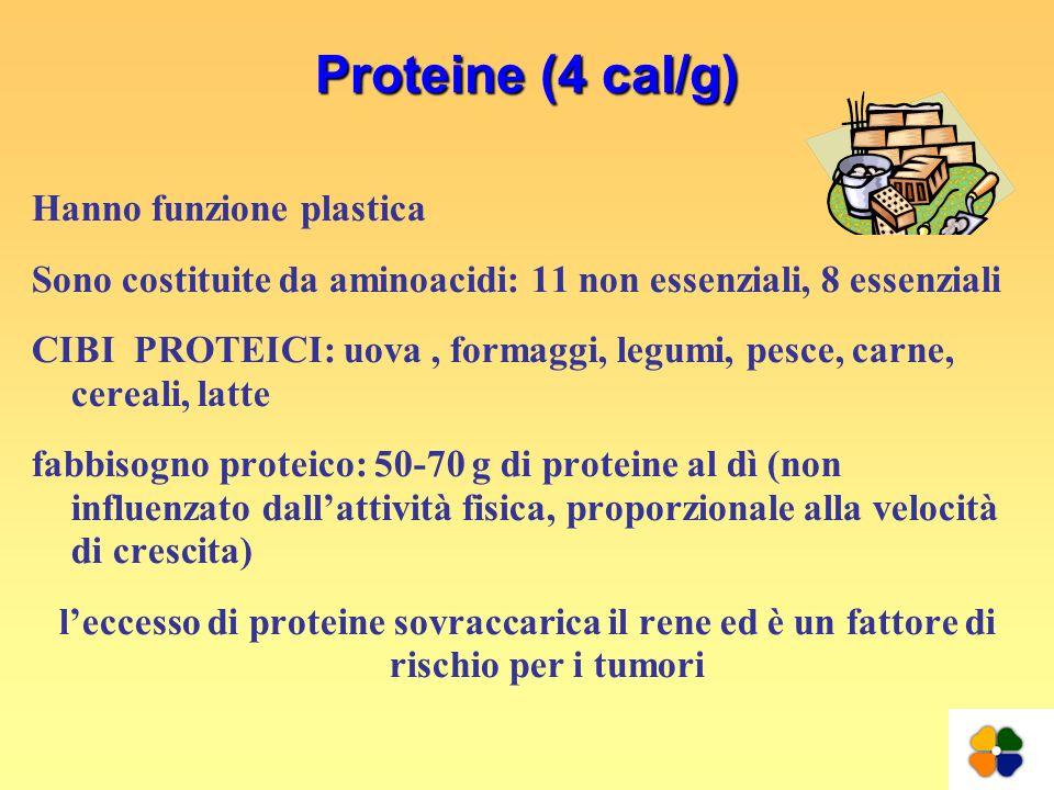 Proteine (4 cal/g) Hanno funzione plastica Sono costituite da aminoacidi: 11 non essenziali, 8 essenziali CIBI PROTEICI: uova, formaggi, legumi, pesce