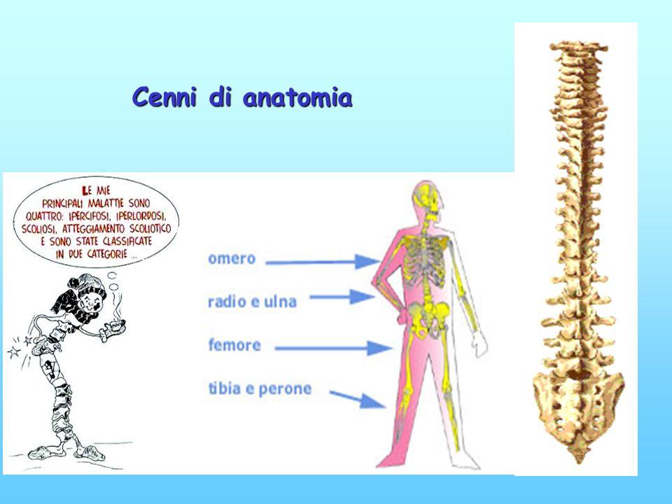 LA COLONNA VERTEBRALE è formata da una serie di ossa sovrapposte mobili fra di loro, separate dai dischi intervertebrali