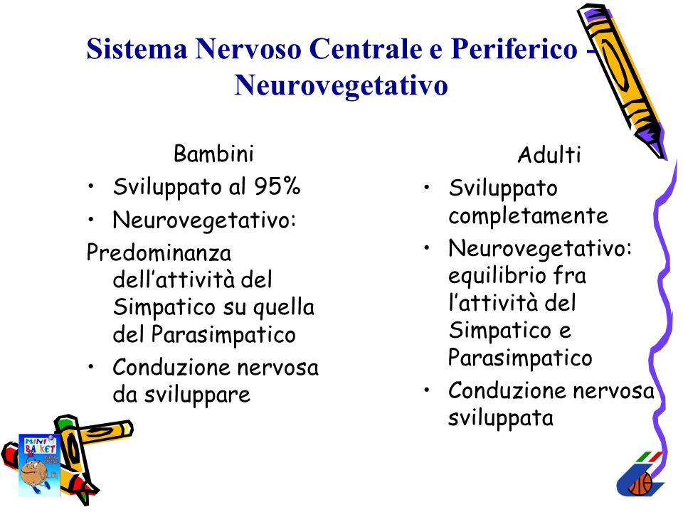 Sistema Nervoso Centrale e Periferico - Neurovegetativo Bambini Sviluppato al 95% Neurovegetativo: Predominanza dellattività del Simpatico su quella d