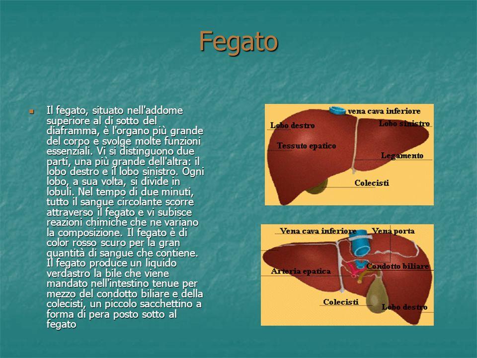 Esofago L'esofago è un tubo lungo circa 25 cm situato dietro la trachea, che collega la faringe allo stomaco. La parete dell'esofago è composta da div