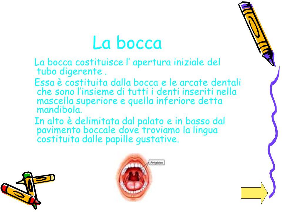 La bocca La bocca costituisce l apertura iniziale del tubo digerente. Essa è costituita dalla bocca e le arcate dentali che sono linsieme di tutti i d
