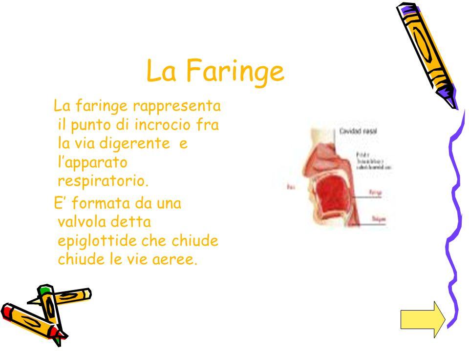 La Faringe La faringe rappresenta il punto di incrocio fra la via digerente e lapparato respiratorio. E formata da una valvola detta epiglottide che c