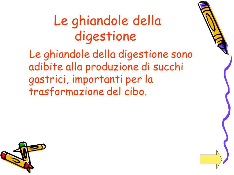 Le ghiandole della digestione Le ghiandole della digestione sono adibite alla produzione di succhi gastrici, importanti per la trasformazione del cibo