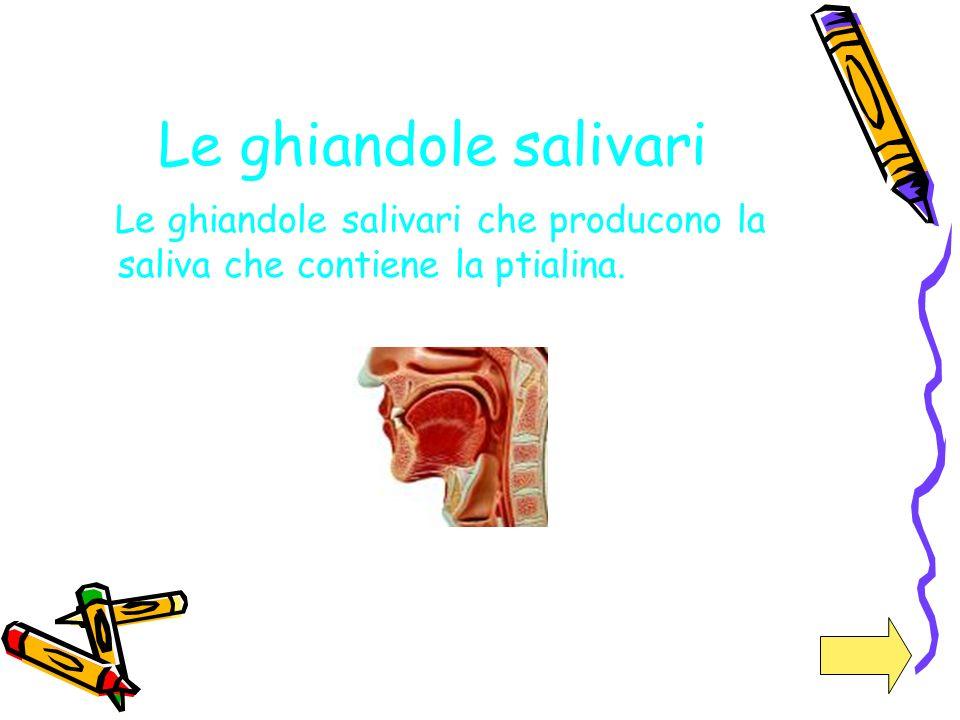 Le ghiandole salivari Le ghiandole salivari che producono la saliva che contiene la ptialina.