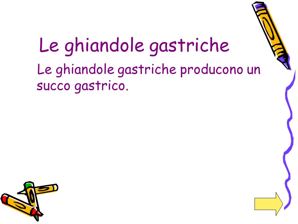 Le ghiandole gastriche Le ghiandole gastriche producono un succo gastrico.