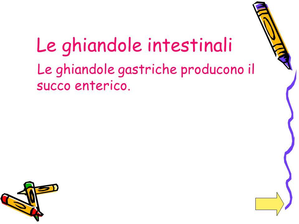 Le ghiandole intestinali Le ghiandole gastriche producono il succo enterico.