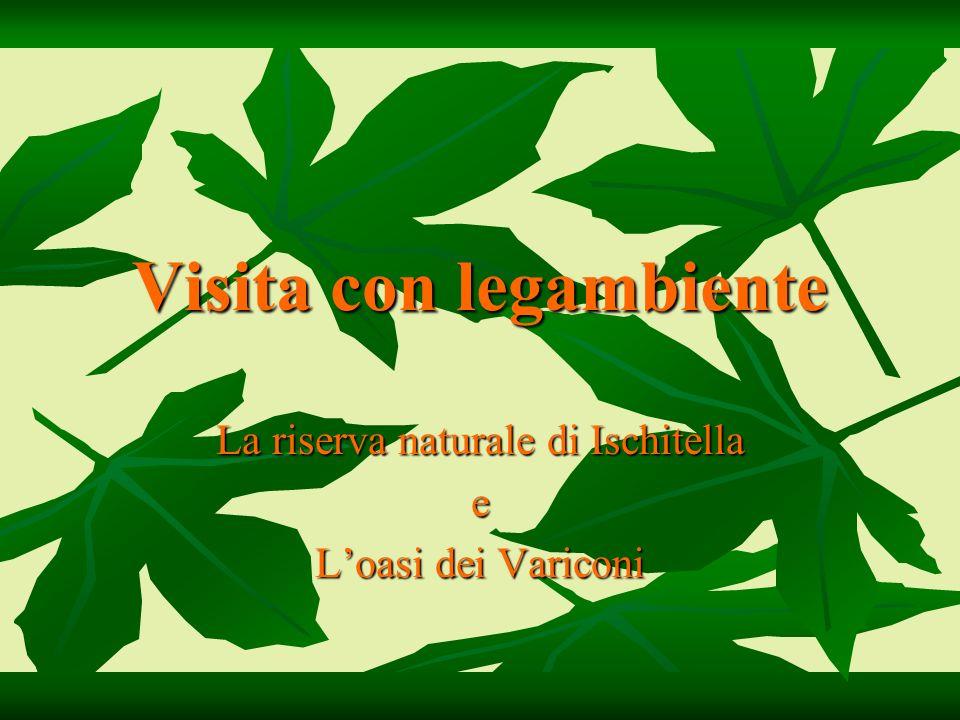 Visita con legambiente La riserva naturale di Ischitella e Loasi dei Variconi