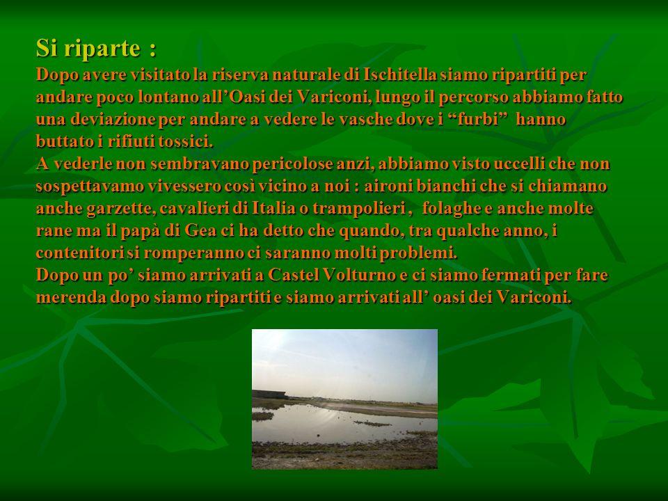 Si riparte : Dopo avere visitato la riserva naturale di Ischitella siamo ripartiti per andare poco lontano allOasi dei Variconi, lungo il percorso abb