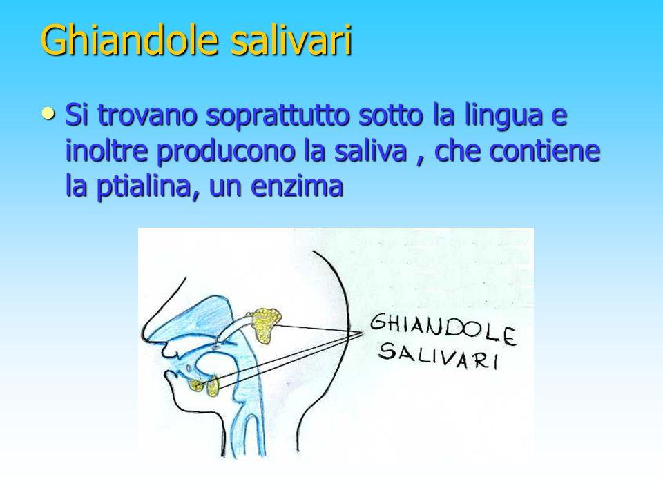 Ghiandole salivari Si trovano soprattutto sotto la lingua e inoltre producono la saliva, che contiene la ptialina, un enzima
