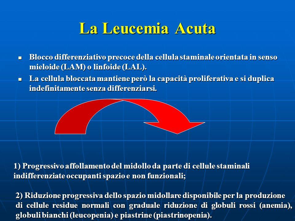 La Leucemia Acuta (II) Precursori dei globuli rossi Precursori delle piastrine Progenitori dei globuli bianchi Blasti leucemici Fase iniziale Fase intermedia Fase avanzata
