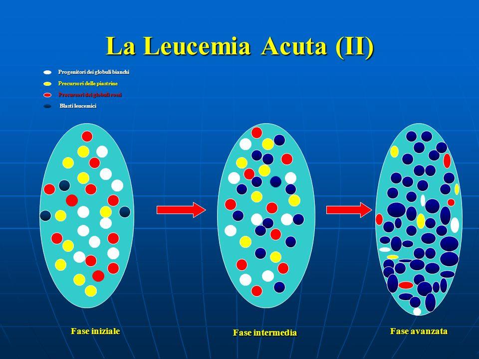 La Leucemia Acuta: conseguenze ANEMIA (da riduzione dei GR): pallore, tachicardia, soffi cardiaci, astenia, dispnea, cefalea, obnubilamento del sensorio.