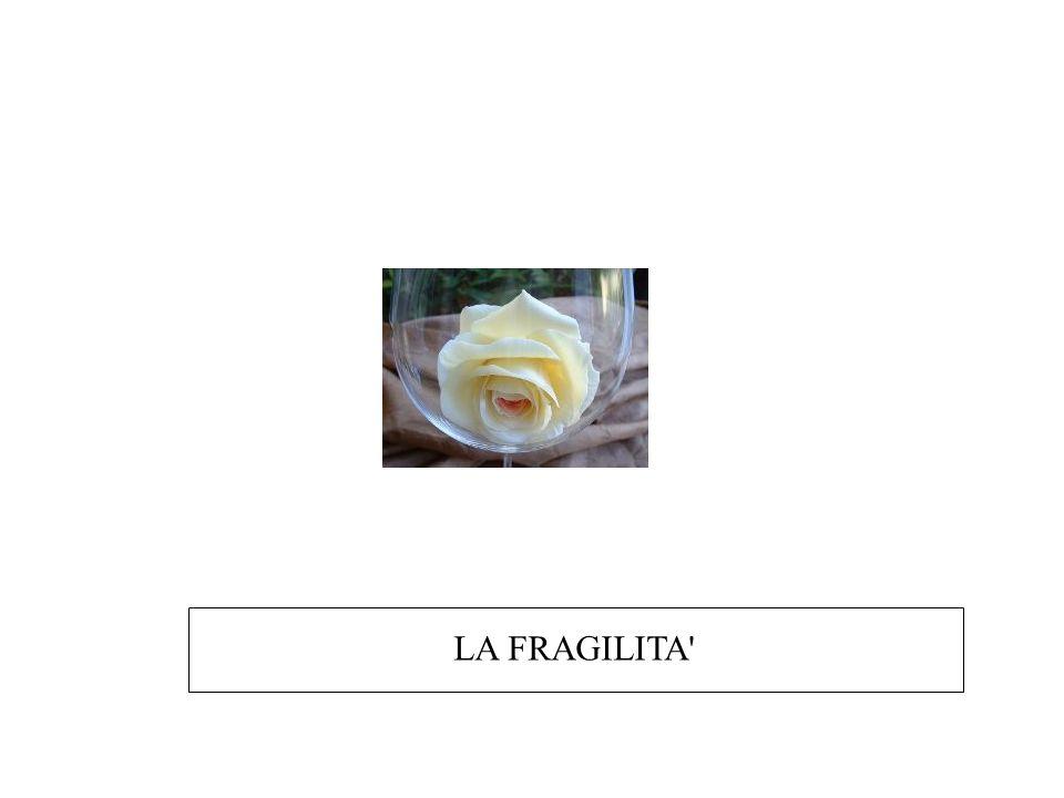 LA FRAGILITA'