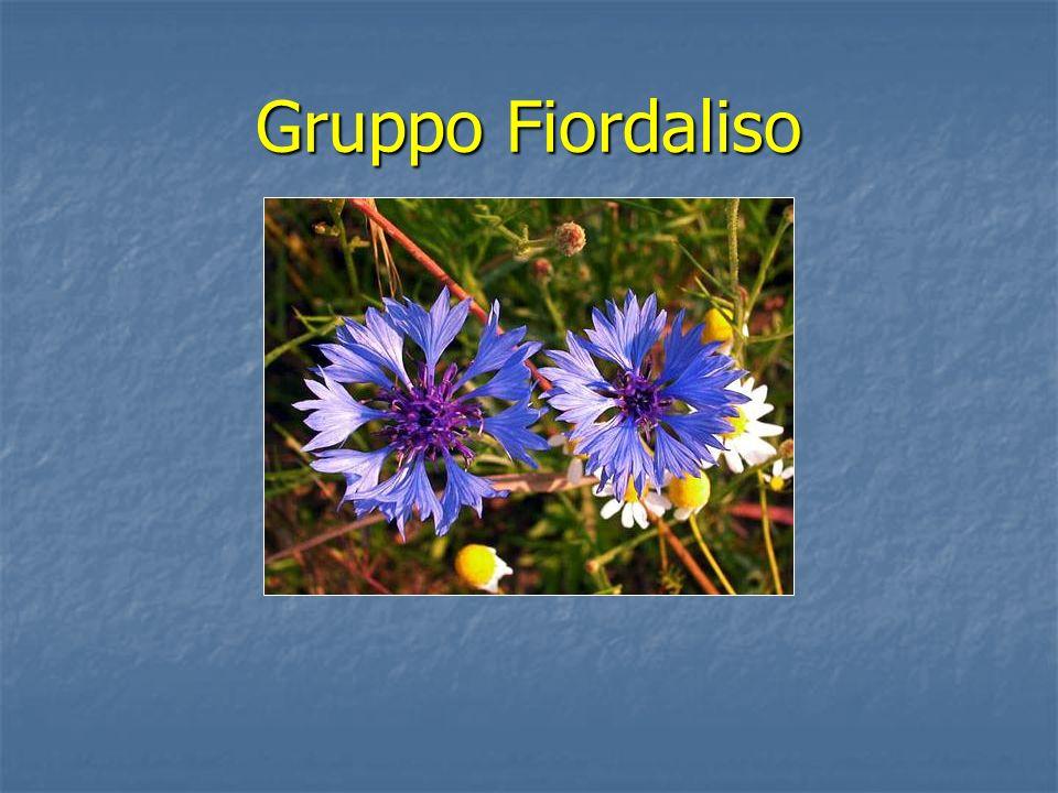 Gruppo Fiordaliso