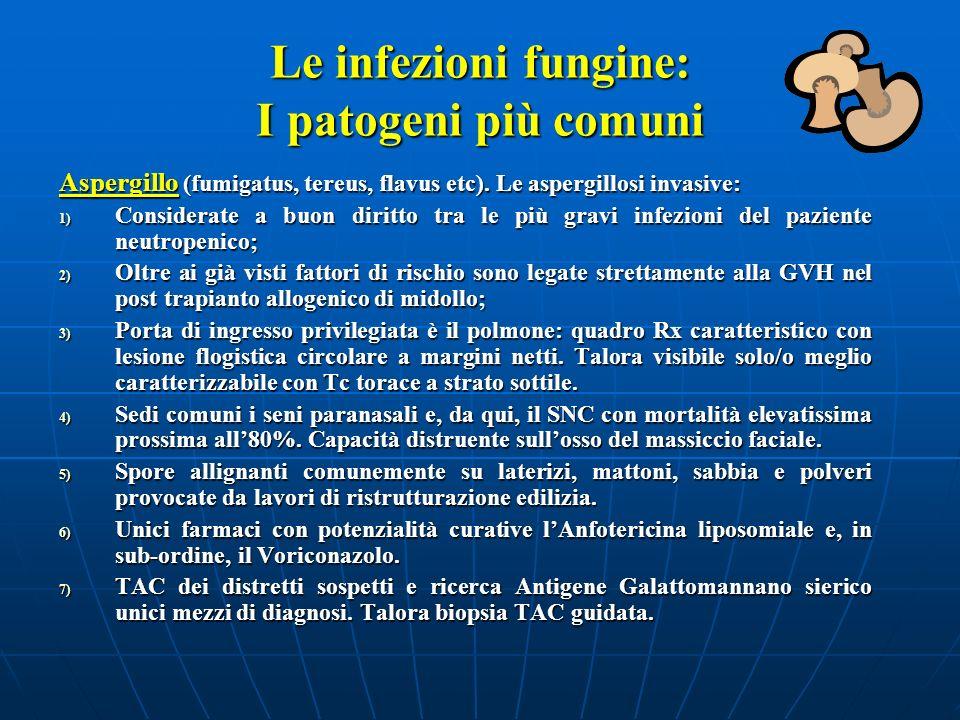 Le infezioni fungine: I patogeni più comuni Aspergillo (fumigatus, tereus, flavus etc). Le aspergillosi invasive: 1) Considerate a buon diritto tra le