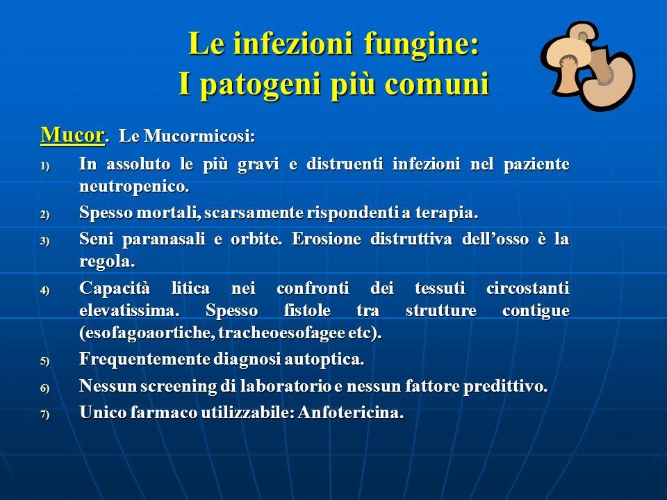 Le infezioni fungine: I patogeni più comuni Mucor. Le Mucormicosi: 1) In assoluto le più gravi e distruenti infezioni nel paziente neutropenico. 2) Sp