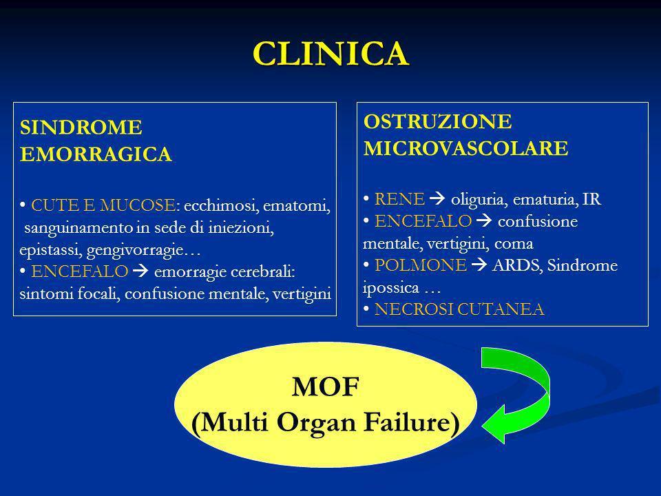 CLINICA MOF (Multi Organ Failure) OSTRUZIONE MICROVASCOLARE RENE oliguria, ematuria, IR ENCEFALO confusione mentale, vertigini, coma POLMONE ARDS, Sin