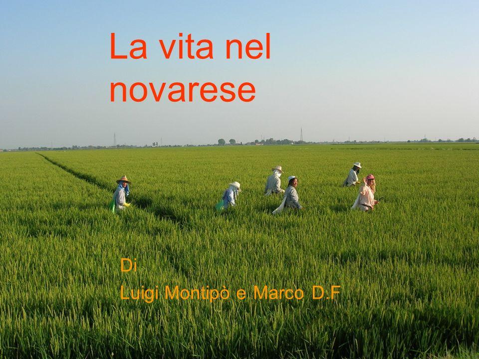 La vita nel novarese Di Luigi Montipò e Marco D.F