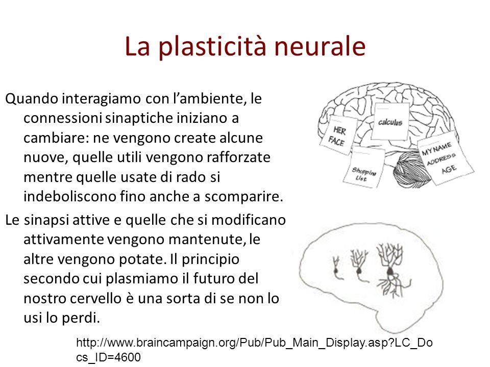 La plasticità neurale Quando interagiamo con lambiente, le connessioni sinaptiche iniziano a cambiare: ne vengono create alcune nuove, quelle utili vengono rafforzate mentre quelle usate di rado si indeboliscono fino anche a scomparire.
