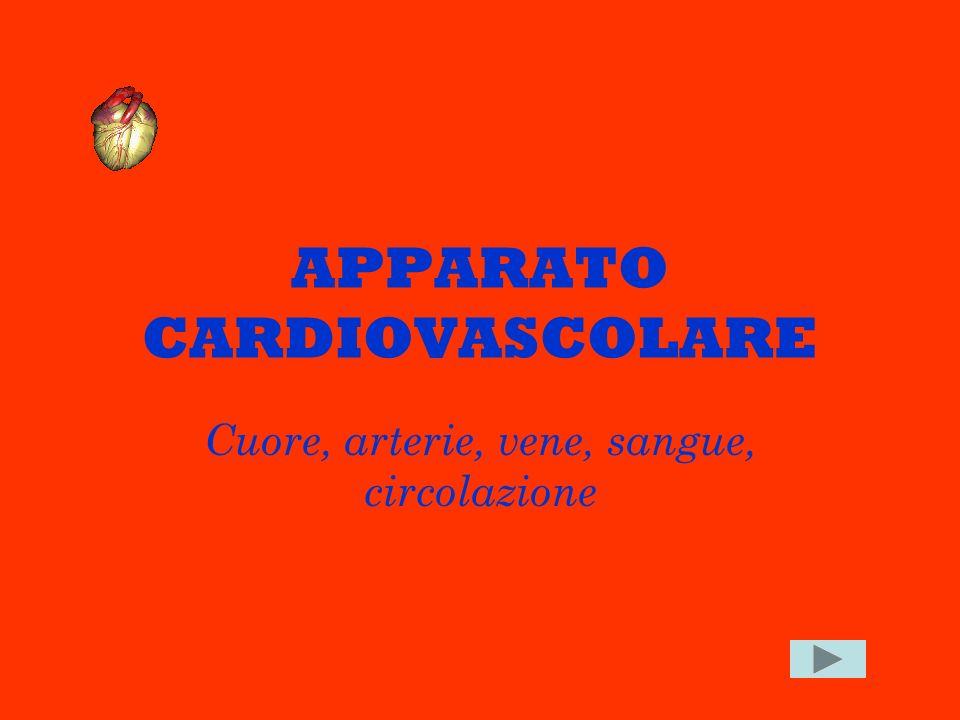 APPARATO CARDIOVASCOLARE Cuore, arterie, vene, sangue, circolazione