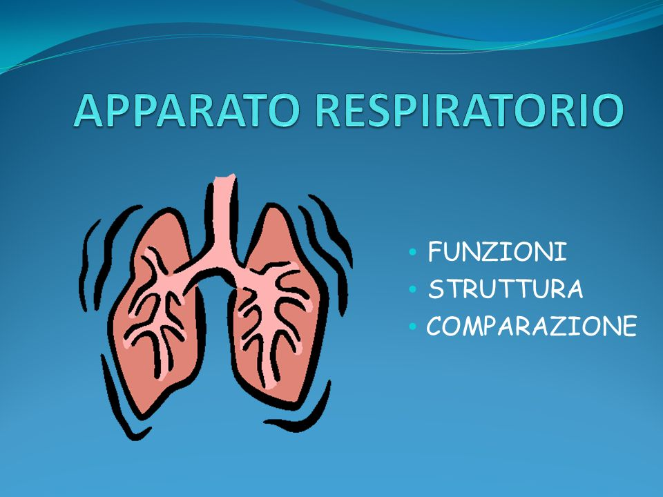 FUNZIONI Assumere ossigeno dallaria, rendendolo disponibile per il nostro organismo.