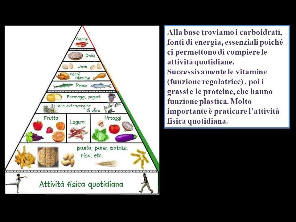Alla base troviamo i carboidrati, fonti di energia, essenziali poiché ci permettono di compiere le attività quotidiane. Successivamente le vitamine (f