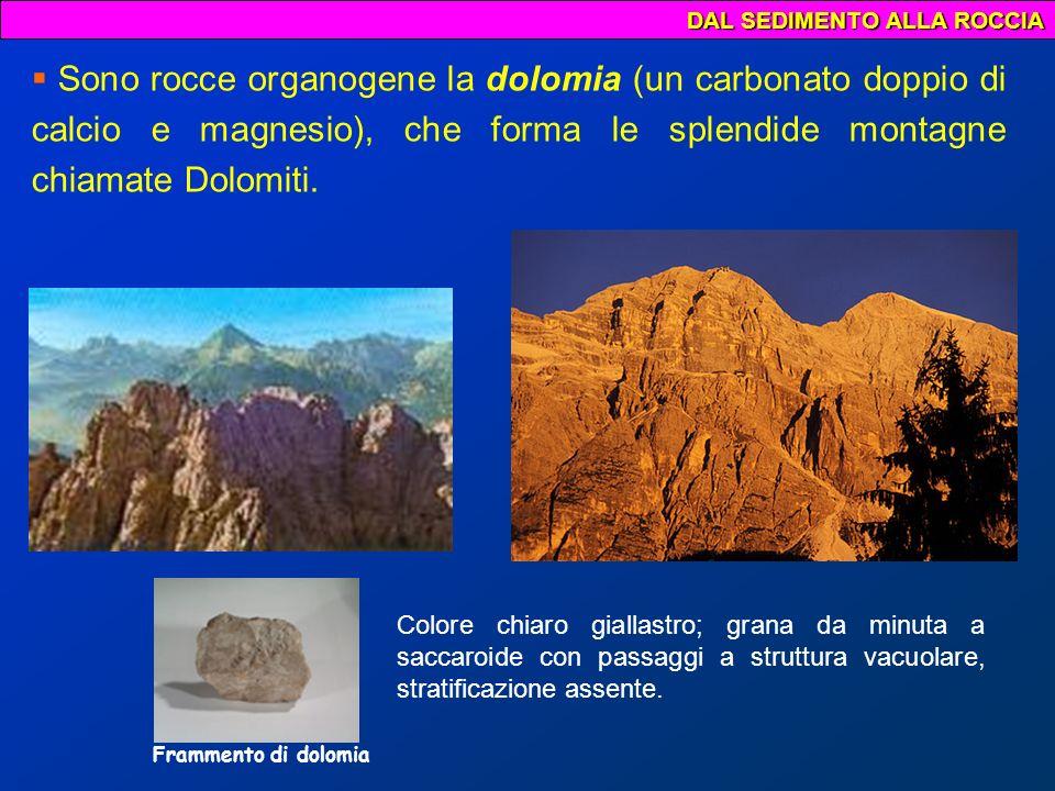 DAL SEDIMENTO ALLA ROCCIA Le rocce silicee si formano in seguito a precipitazione di silice.