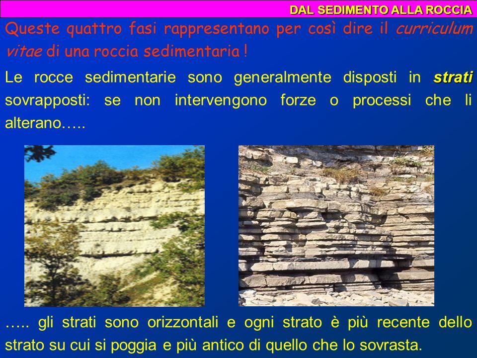 DAL SEDIMENTO ALLA ROCCIA Rocce organogene o biogene Rocce di origine chimica Le rocce sedimentarie vengono normalmente classificate a seconda dei processi che le hanno formate; esse vengono distinte in: Rocce clastiche o detritiche sono formate da detriti (clasti) spesso cementati che derivano dallerosione di rocce preesistenti; Classificazione delle rocce sedimentarie sono costituite da frammenti di scheletri o da prodotti dellattività degli organismi; si formano in bacini marini in cui si verificano particolari fenomeni chimico – fisici.