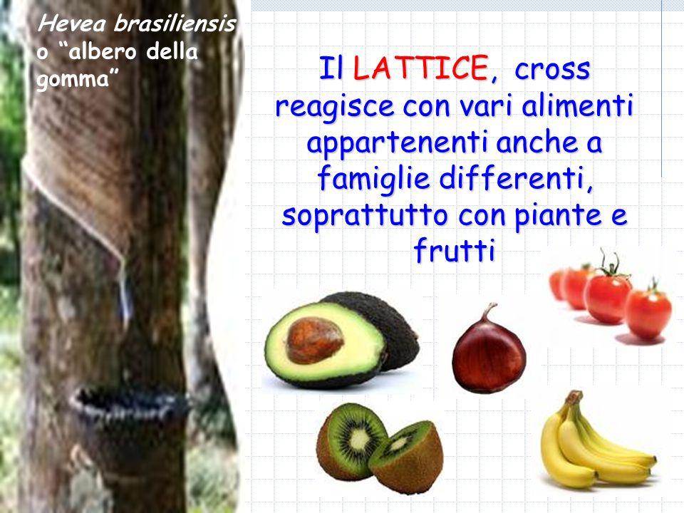 Il LATTICE, cross reagisce con vari alimenti appartenenti anche a famiglie differenti, soprattutto con piante e frutti Hevea brasiliensis o albero del
