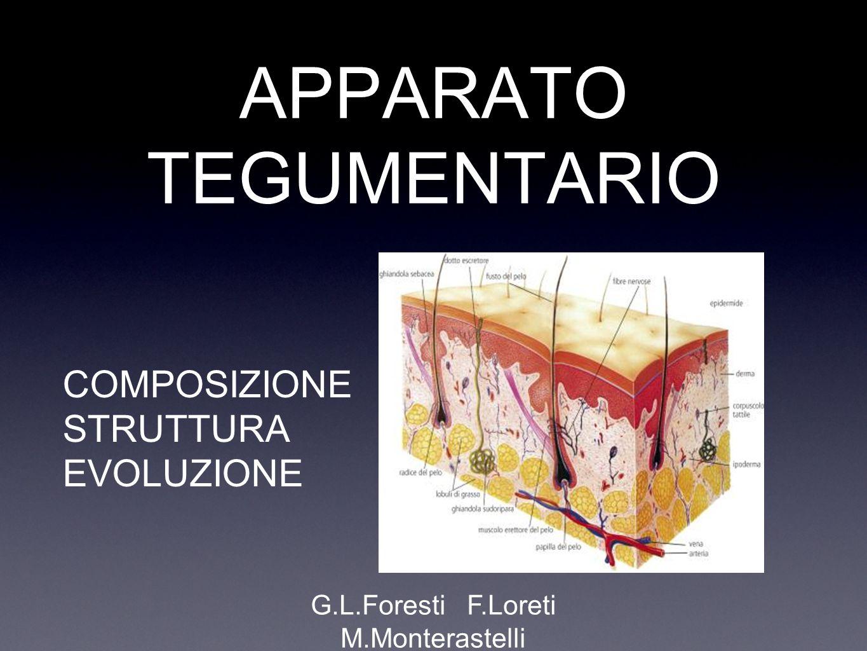APPARATO TEGUMENTARIO PELLE ANNESSI CUTANEI EPIDERMIDE DERMA PELI GHIANDOLE UNGHIE
