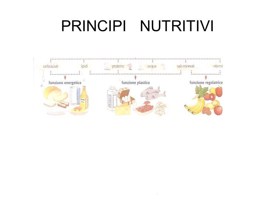 organismi autotrofi eterotrofi Producono autonomamente le sostanze nutritive di cui necessitano Devono assumere dall esterno il nutrimento non essendo in grado di produrlo