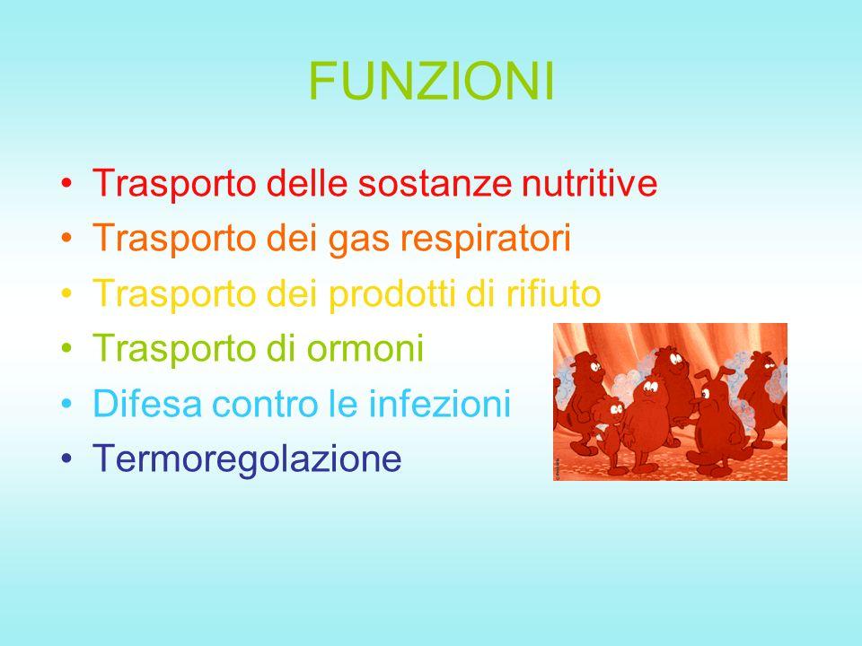 FUNZIONI Trasporto delle sostanze nutritive Trasporto dei gas respiratori Trasporto dei prodotti di rifiuto Trasporto di ormoni Difesa contro le infezioni Termoregolazione