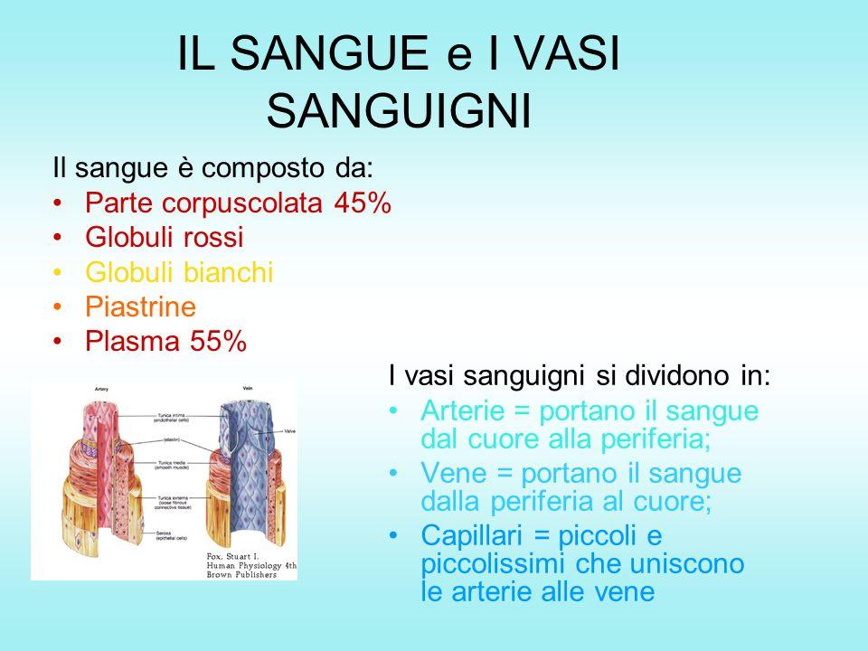 IL SANGUE e I VASI SANGUIGNI Il sangue è composto da: Parte corpuscolata 45% Globuli rossi Globuli bianchi Piastrine Plasma 55% I vasi sanguigni si di