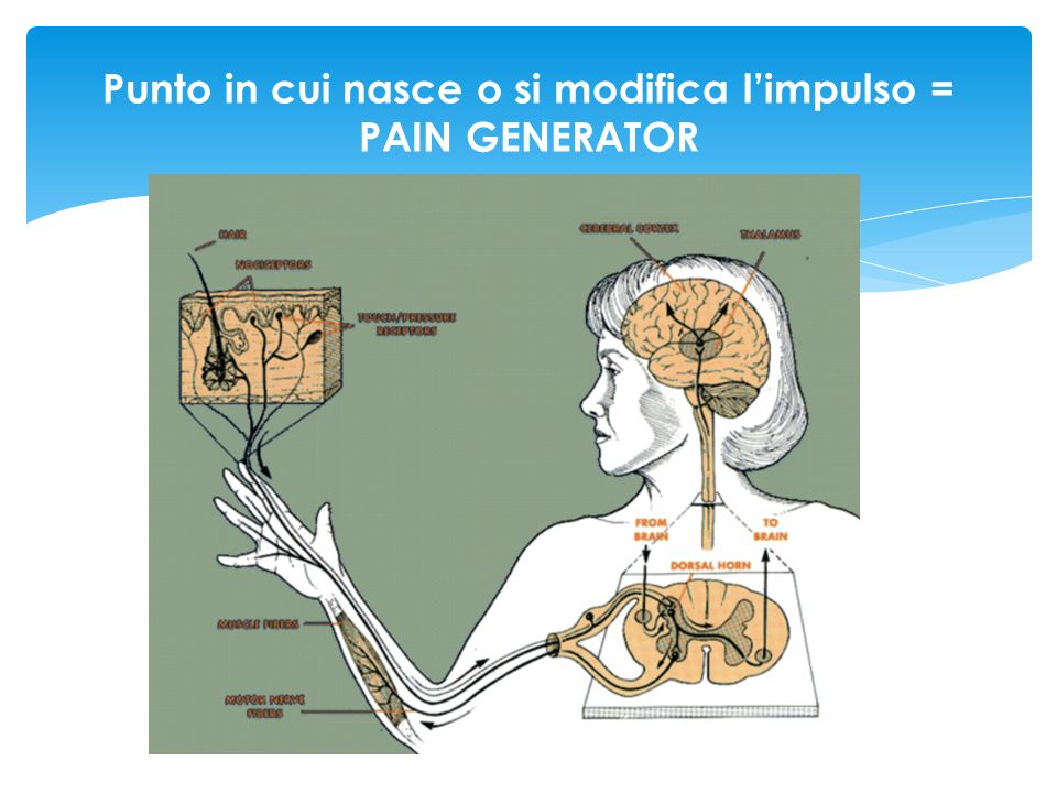 PAIN GENERATORS Recettor e tissutale Sito ectopico Sinapsi spinale -Modula gli impulsi afferenti (fibre A-delta e C) - Amplifica gli impulsi (fibre A-delta e C) sensibilizzazione spinale (fisiopatologia) componente neuropatica (definizione su base clinica….termine confondente?) Genera gli impulsi del dolore nocicettivo Genera gli impulsi del dolore neuropatico periferico