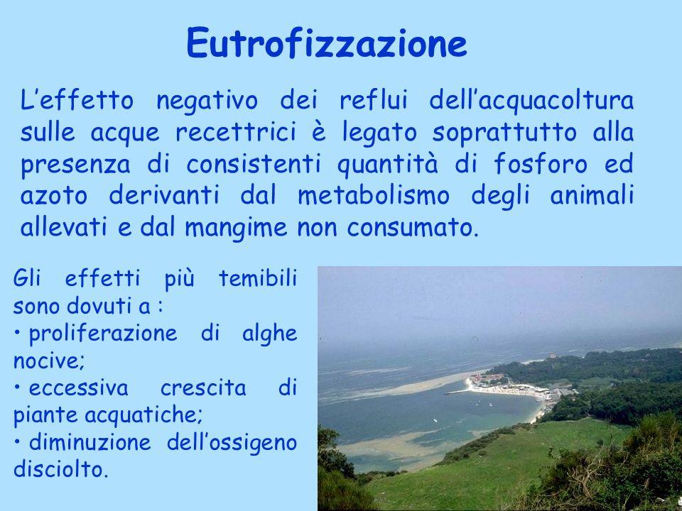 Eutrofizzazione Leffetto negativo dei reflui dellacquacoltura sulle acque recettrici è legato soprattutto alla presenza di consistenti quantità di fos