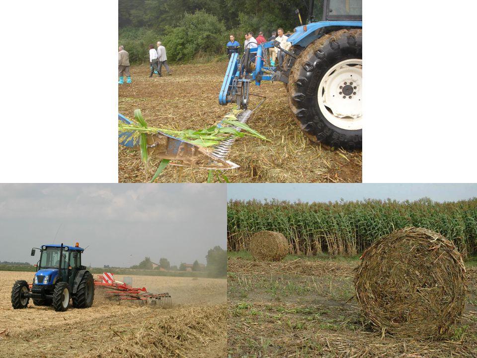 Pioppo SRF Short Rotation Forestry (SRF) di pioppo La SRF di pioppo è la coltivazione di cloni selezionati specificatamente per impianti molto fitti destinati alla produzione di cippato di legno, impiegato come combustibile SRF significa forestazione a breve rotazione o ceduo a breve rotazione Le piantagioni hanno una densità che varia dalle 6.000 alle 14.000 piante/ha I turni di ceduazione dipendono dalla densità di impianto: 6.000-7.000 piante/ha (taglio biennale), 10.000-14.000 piante/ha (taglio annuale) I lavori di impianto, così come tutte le altre lavorazioni, sono completamente meccanizzabili Produttività media annua: 18 - 22 t sostanza secca/ha