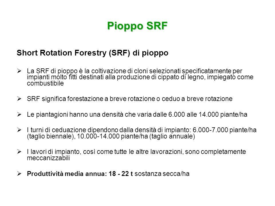 Pioppo SRF Short Rotation Forestry (SRF) di pioppo La SRF di pioppo è la coltivazione di cloni selezionati specificatamente per impianti molto fitti d